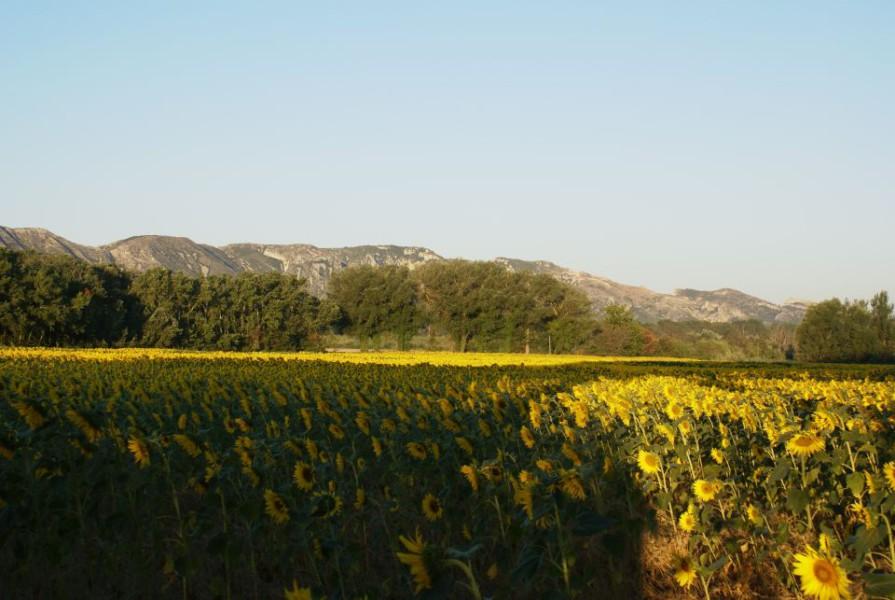 Liste des campings de St Rémy de Provence
